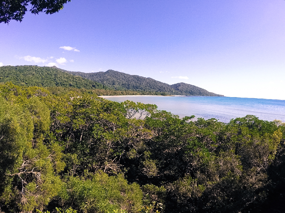 Daintree Forest View