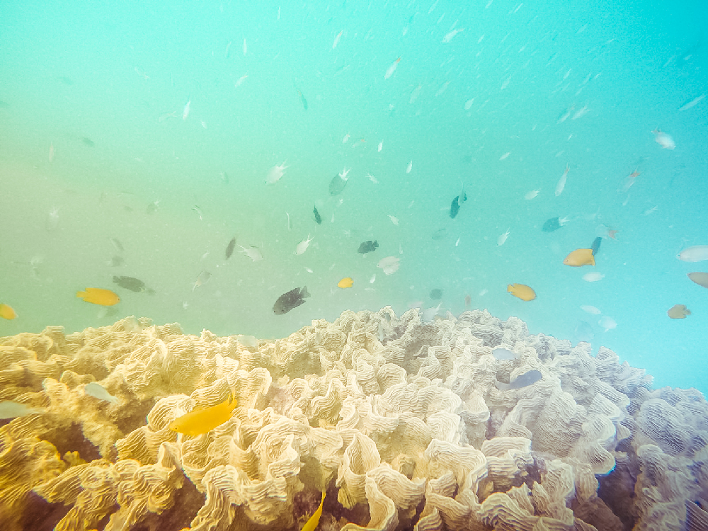 Withsunday Reef