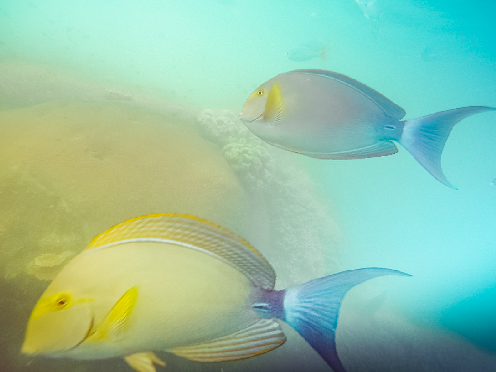 Withsunday Fish