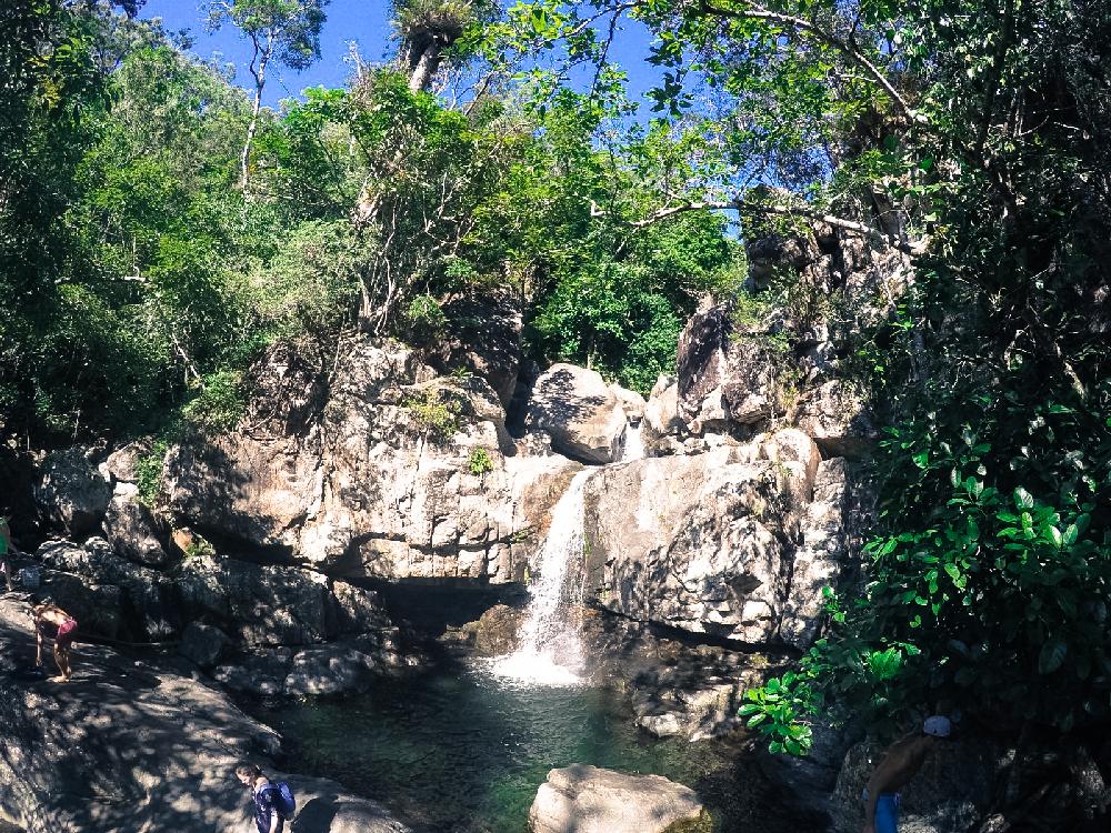 Jourama Falls Forest